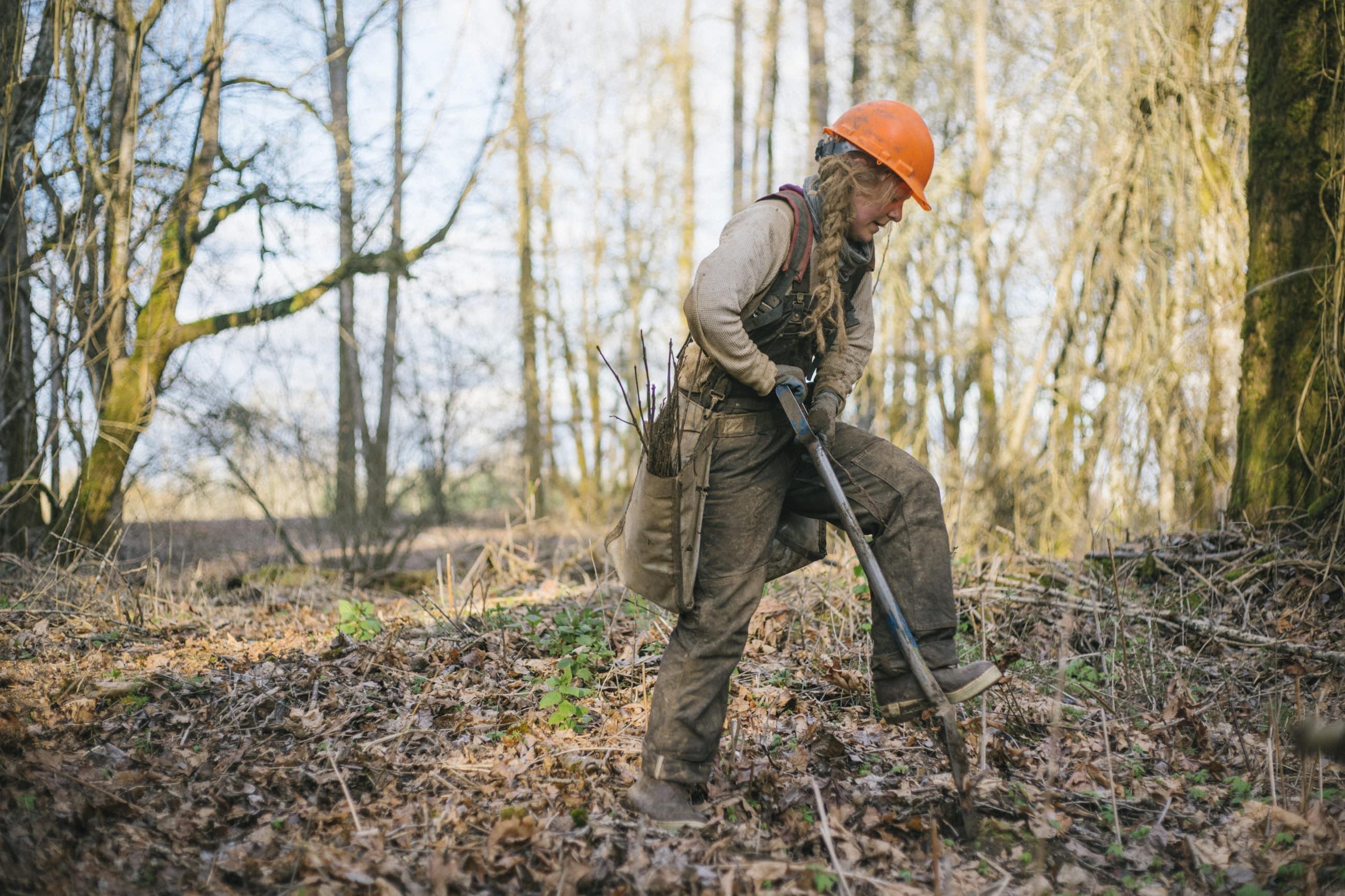 Tree planter digging a hole